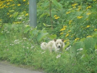 犬 (1).jpg