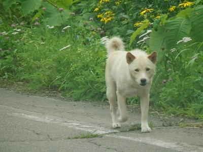 犬 (2).jpg